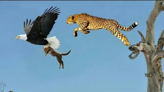 Top 5 best eagle attacks || the best of eagle attacks on human & Animal