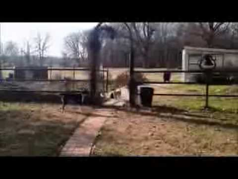 How to keep cats out of your yard. Review on the Petsafe wireless containment system.