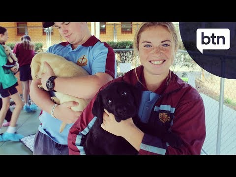 Guide Dog Training - Behind the News