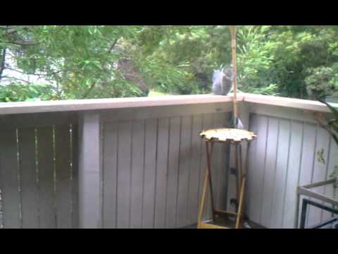 Esperanza the cat watches a naughty squirrel destroy my plant.