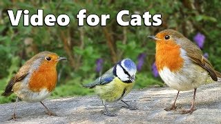 Videos for Cats to Watch : One Hour Birds in April Extravaganza NEW