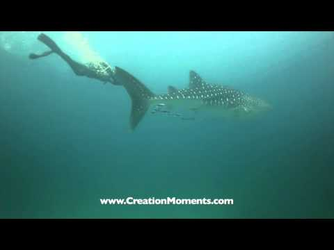 Is The Shark A Living Fossil (Part 1 of 2)