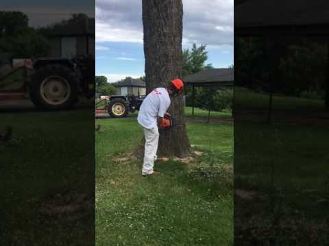 Pecan tree fail