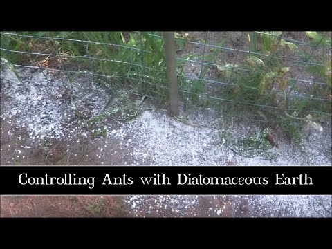 Controling Ants with Diatomaceous Earth
