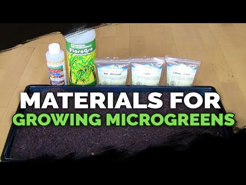 Microgreens Growing: Materials and Beginner's Guide