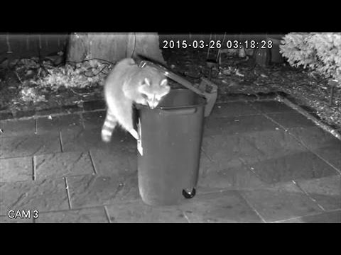 Raccoon-Proof Trash Cans in Toronto