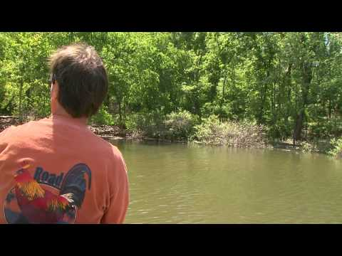 Redear and Bluegill on Lake Barkley
